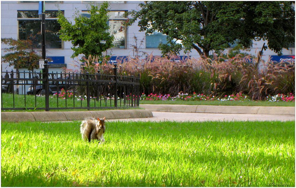 Farragut Squirrel - A Washington Moment