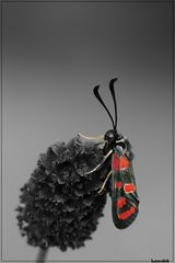 Fashion trench-coat