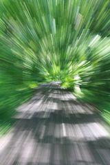 """""""Fast biking"""""""