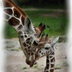 Fast gemalt - Giraffe mit Nachwuchs