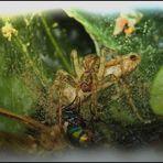 """""""Fast gemalt"""" Spinne und Fliege"""