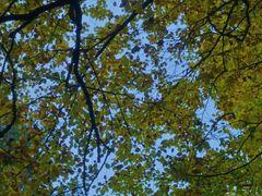 ... fast  Herbst - Laub ...