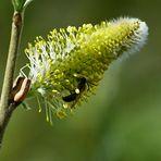 Fast verblüht aber noch Interressant auch für Insekten