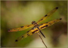 Fast wie ein Schmetterling (2)