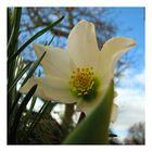 .. fast wieder Frühling