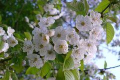 Faszination Baumblüte