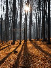 Faszination Buchenwald