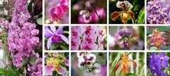 """Faszination Orchideen"""