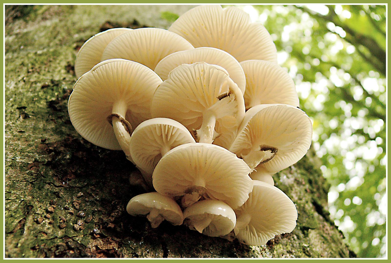 Faszination Pilze