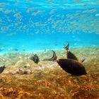 Faszination Unterwasserwelt