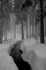 Faszination Winterwald
