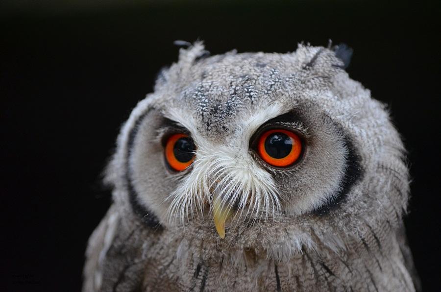 Faszinierende Augen !!!
