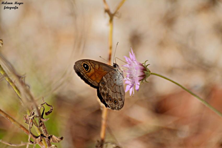 Faszinierende Tierwelt Türkei (1)