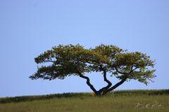 Faszinierender Baum