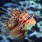 Faszinierender Fisch