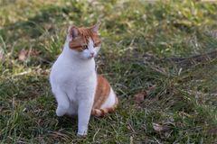 Fasziniert ist diese Katze ...