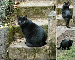 Fauchi auf der Gartentreppe