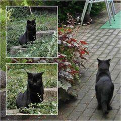 Fauchi, der Stalker