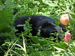 Fauchi versteckt sich im Gras