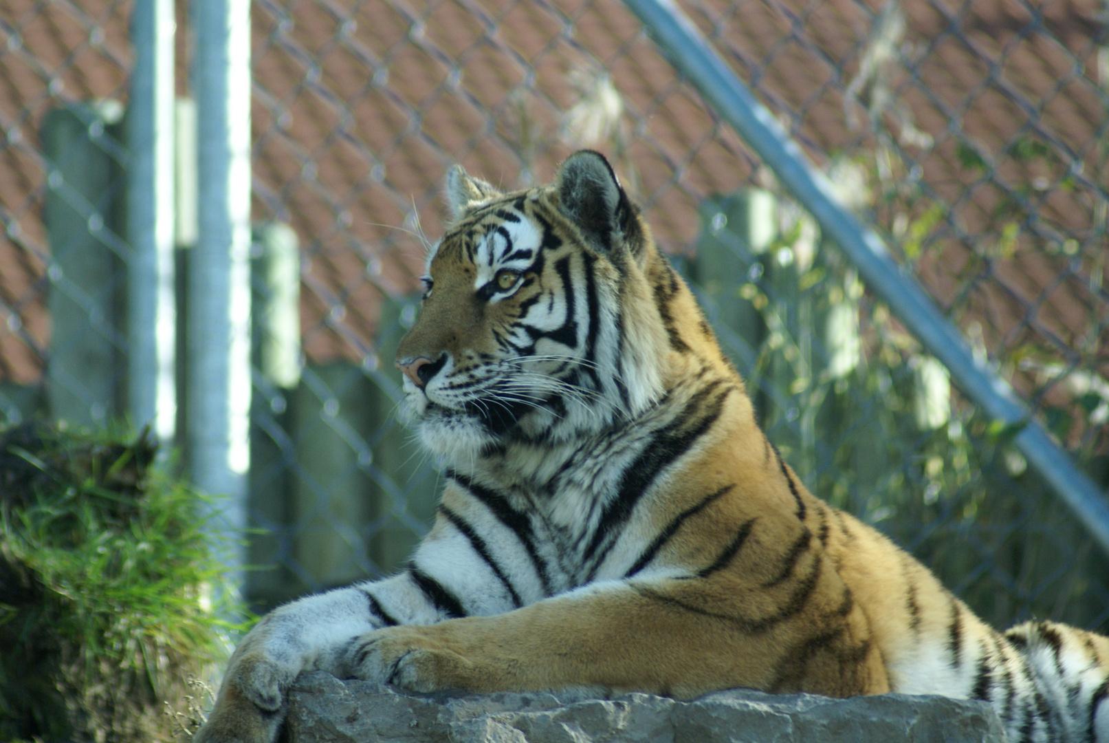 Faul In Der Sonne Liegen Foto Bild Tiere Zoo Wildpark