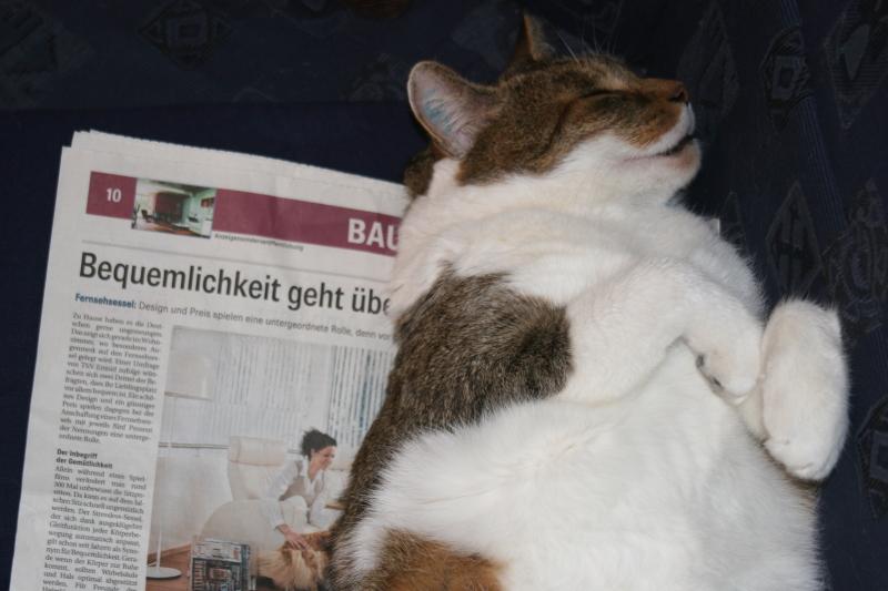 Faule Katze