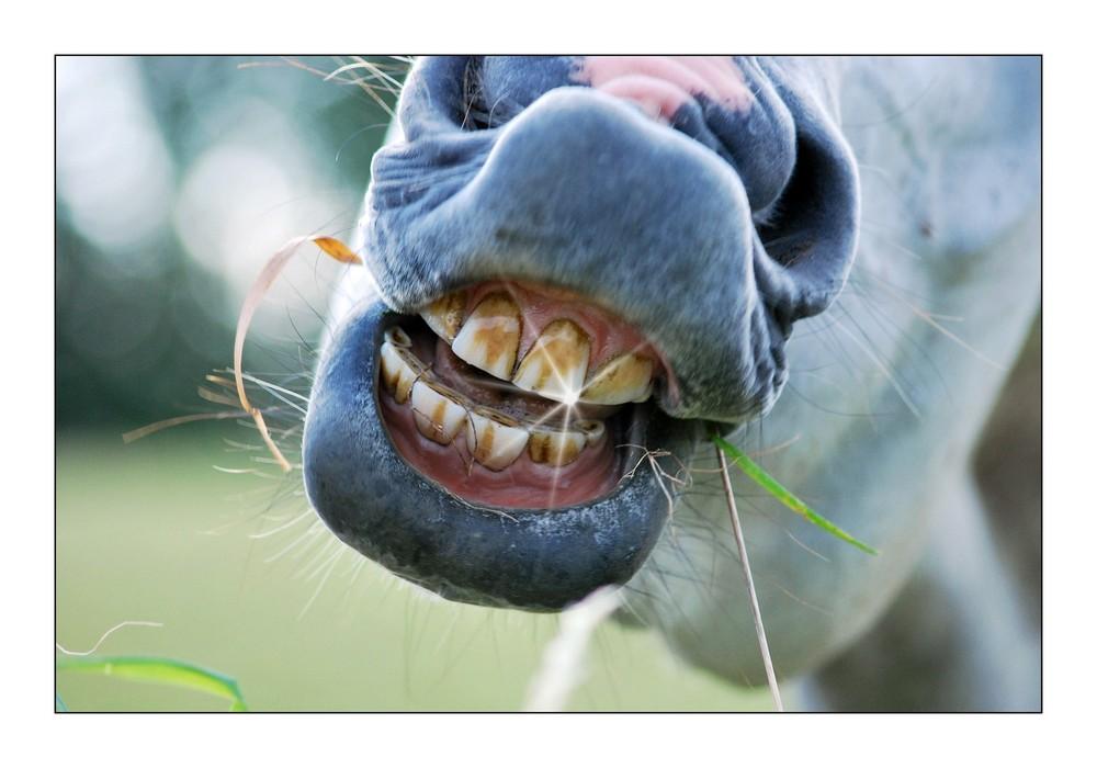 Faule Zähne Foto & Bild | tiere, haustiere, pferde