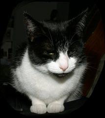 faules Katzenleben