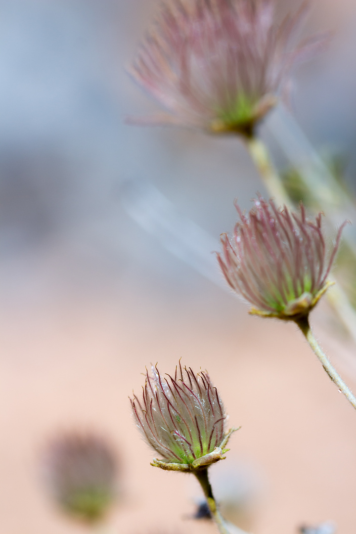 Fauna im Red Canyon