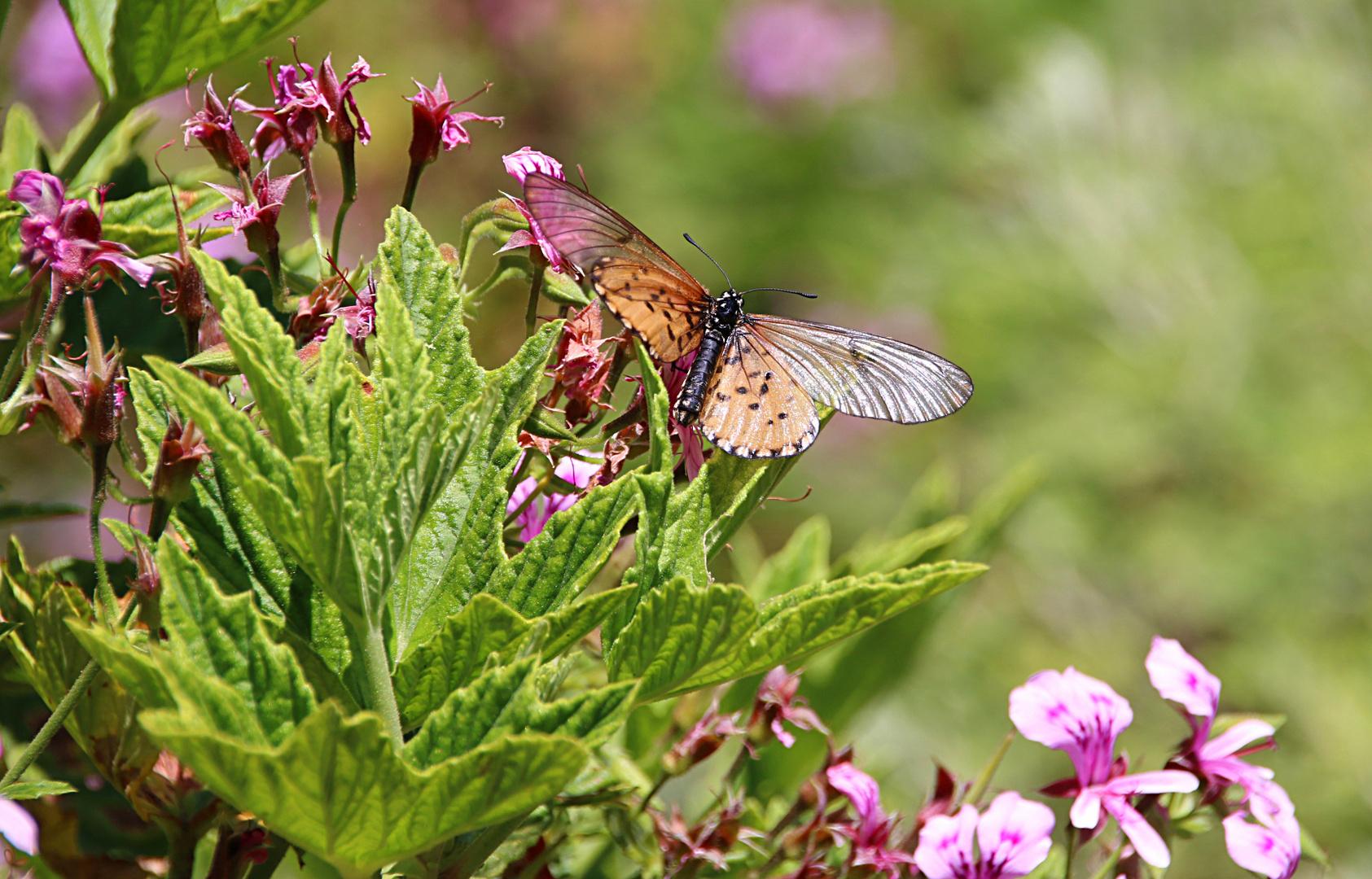 Fauna und Flora in Kirstenbosch