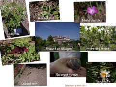 Faune et flore de Mane (04)