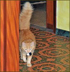 faute de souris , on rapporte  des bouchons....