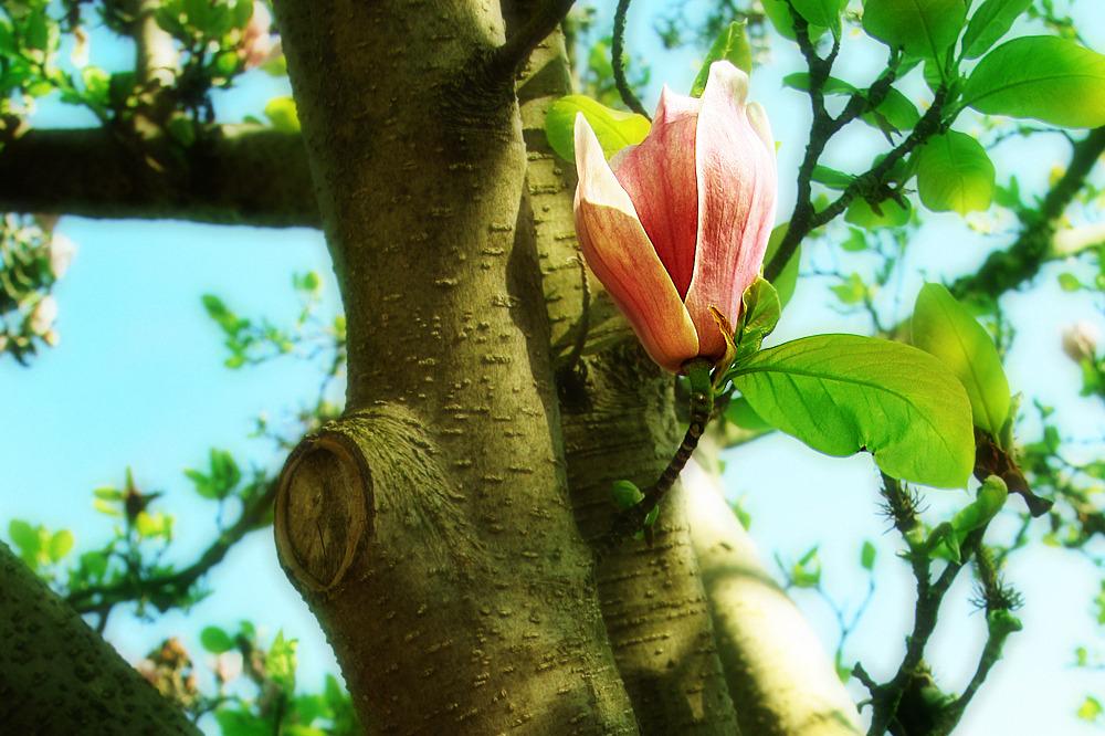 [ favorite blossoms ]