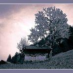 FB 014 Abendlicht #01