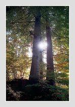 FB 217 Waldlicht #10