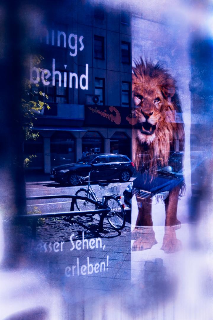 fc Fotowalk Spiegelung
