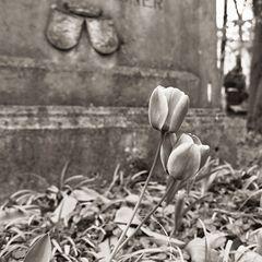 FE2-14  - Frühling auf dem Friedhof