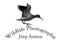 Bird-Photography Jörg Asmus