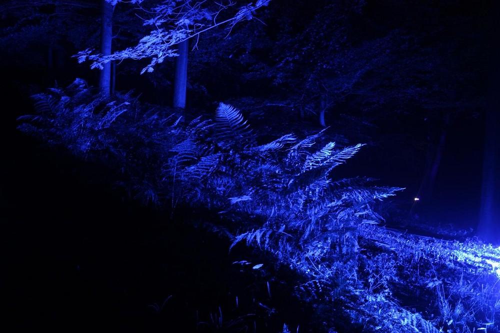 Fear blue forrest
