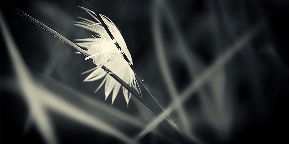 feather theme