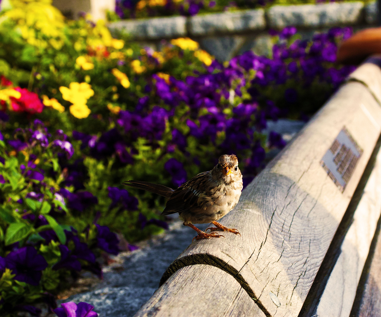 Feathered friend