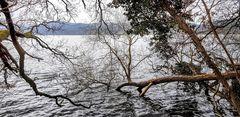 Februar am Laacher See