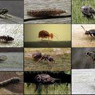 Februar-Insekten