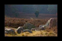 Februarmorgen in der kleinen Heide... (Variante 1 - Goldener Schnitt)