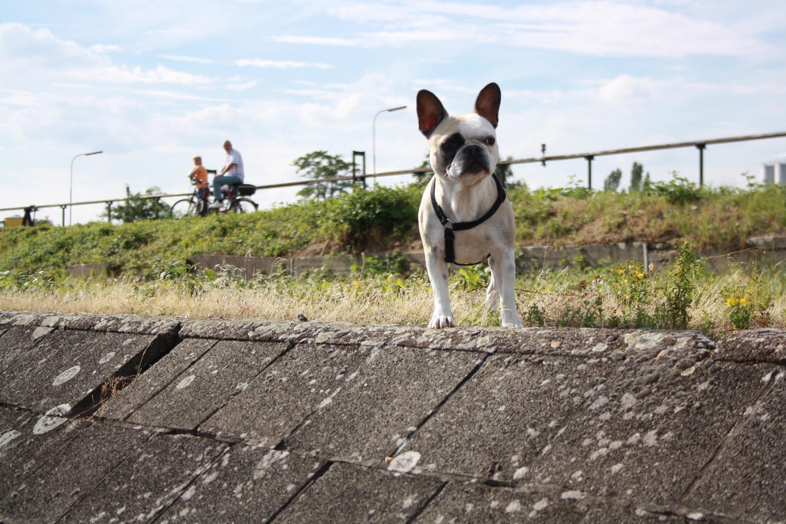 ......fecher Hund :-D
