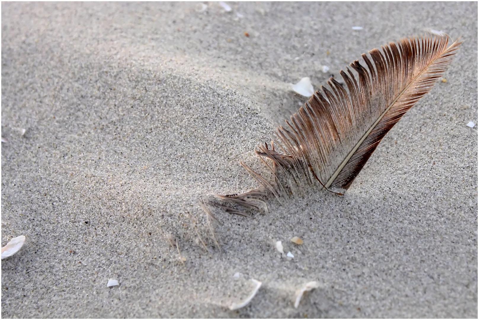 Feder am Strand von Amrum