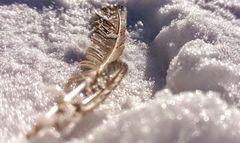 Feder im federleichten Schnee ...