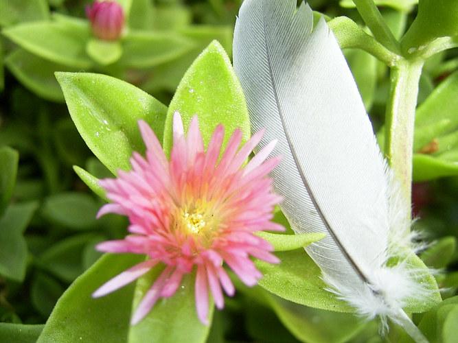 Feder und Blüte