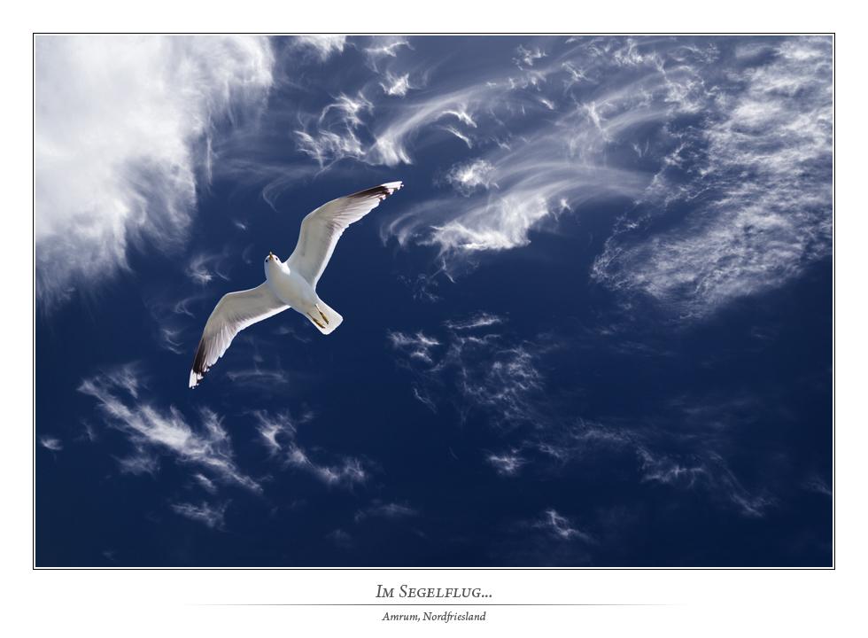 Feder ~ Wolken