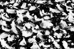 Federn auf einem Moorsee
