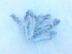 Federn im Eis